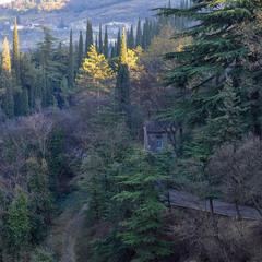Січневий ранок у Тбілісі