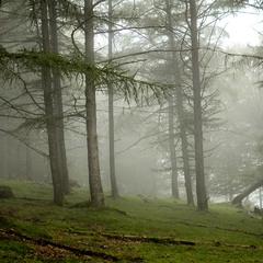 У Тумані