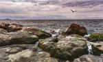 камни,море,баклан...
