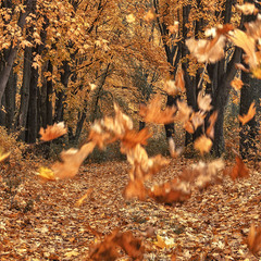 полетели листья