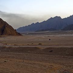 Там, где много песка...