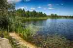 Залив реки Припяти