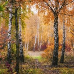 Тропинка в Донецкую Осень
