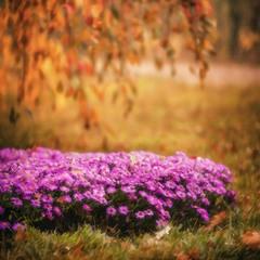 Осенняя стилизация