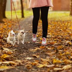 прогулянка в осінній час