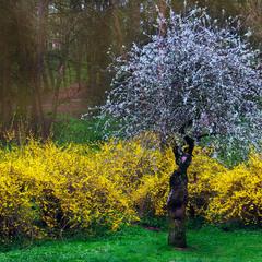Весна у Львові