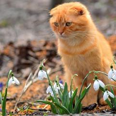Весна пришла!