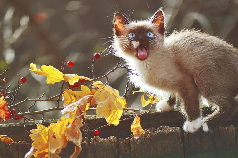 жить картинки коты осень утро будет