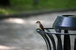 Птичка невеличка.