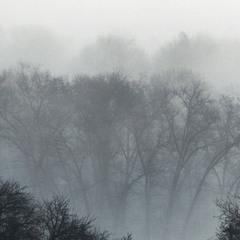 Густой туман.