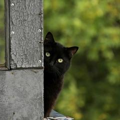 Необщительный сосед.