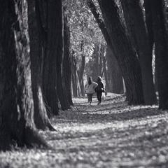 Когда деревья были большими.
