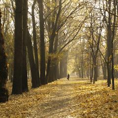 Прогулка по осени.