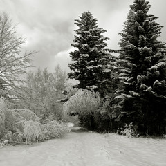 Зимушка - зима.