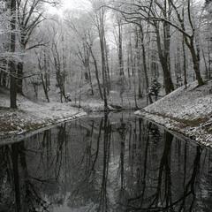 Тишина зимнего парка.