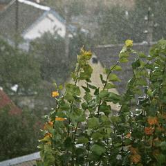 Косой дождь.