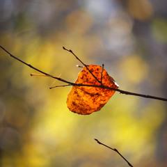 Красочная осень.