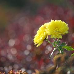 Осенний цветок.