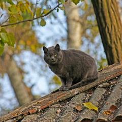 Хозяин старой крыши.