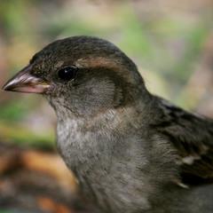Портрет маленькой птички.