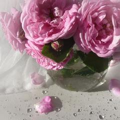"""""""Троянди"""" із серії """"Радію...що літо!!!"""""""