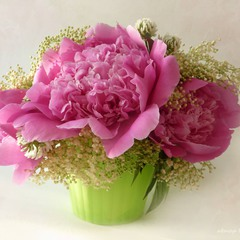 І♥ flowers