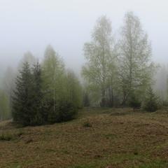 Туман в Карпатах