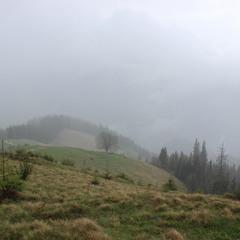 ...через туман та дощ...