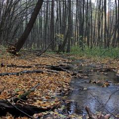Ліс змінився і став прозорим...Осінь прийшла