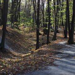 Ліс зелений і свіжий..невже Осінь?!