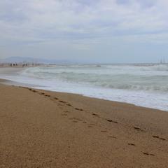 Следы на кромке пляжа