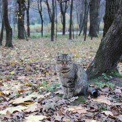 Про кота та осінь..