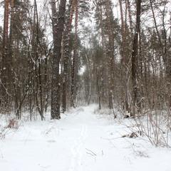 Гей, у лісі...
