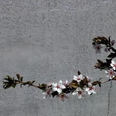 Весна на бетоні