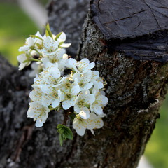 Весна. Відродження.