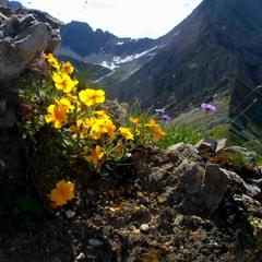 Квіти у горах