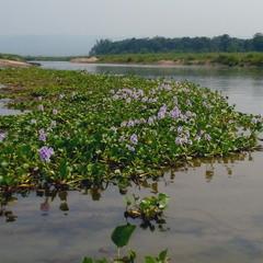 река Рапти