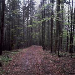 ...у лісі-лісі темному...