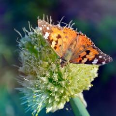 Метелики атакують!)
