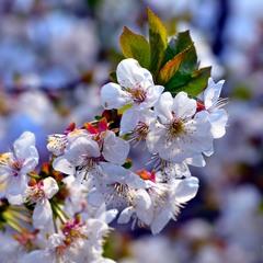 Нехай весна розквітає у ваших серцях! Теплих вам днів і сонячного настрою!