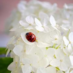 Квіти повинні бути без приводу, а сонце світити завжди...