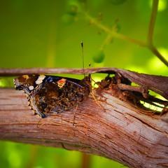 Щастя подібно метелику. Чим більше ловиш його, тим більше воно вислизає...