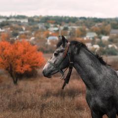 Конь по имени Козак