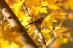Жёлтая осень