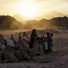 Бедуины