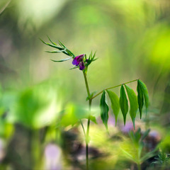 Під пологом чарівного лісу