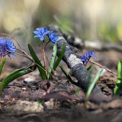 Вистава у весняному лісі