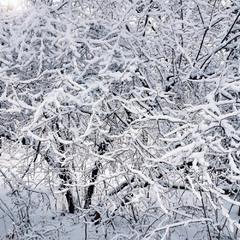 снігова вишиванка
