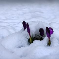 !!!!Весна наступає
