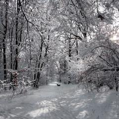 Морозна прогулянка
